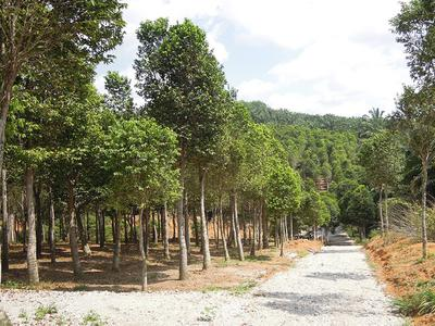 Asia Plantation Capital plans to continue its expansion in Malaysia through joint ventures and acquisitions