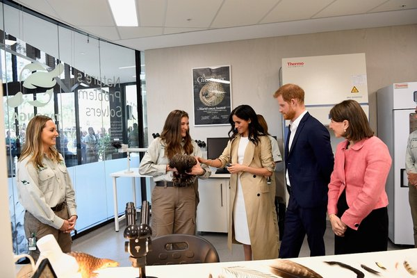 Harry and Meghan - Industry of Science and Learning laboratories - echidna