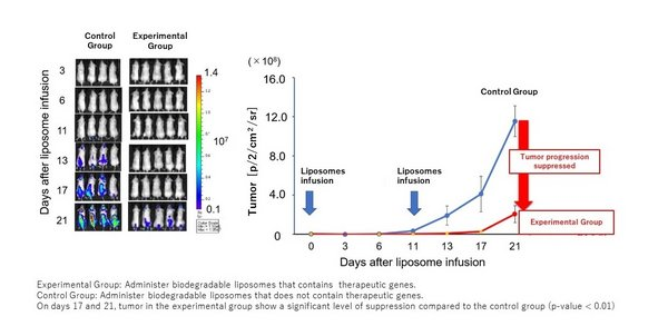 Figure 2 Verification of the effects of tumor-tropic liposomes on mice bearing T-cell tumors