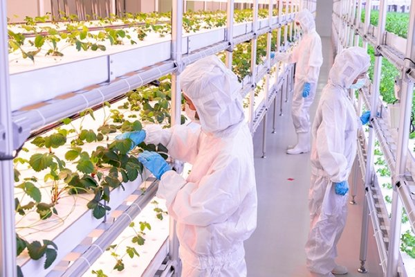"""""""Facilities such as this brand-new plant factory, developed by Thailand's National Science and Technology Development Agency using cutting-edge technology to enhance the quality and productivity of plants, will be built on a bigger scale in the EECi in the near future."""""""