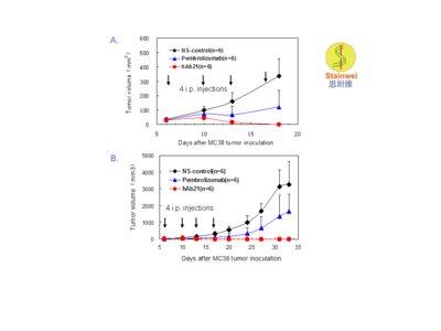 抗PD-1 单抗hAb21在PD-1人源化小鼠移植肿瘤模型中测试结果 PD-1基因人源化纯合子小鼠(基因背景为C57BL/6) 背部皮下接种数量约为1 x106的同源的小鼠结肠癌细胞MC38,待接种的肿瘤体积长至米粒大小时(约50mm3,接种后第6天),将动物随机分为3组(每组6只),分别在接种后第6, 10, 13及 17 天腹腔注射200 ug抗PD-1单抗pembrolizumab, hAb21 单抗或生理盐水。其中图A为接种肿瘤的生长早期曲线; 图B为接种肿瘤的生长全程曲线。