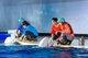 上海长风海洋世界白鲸剧场全新推出《北极历险记》