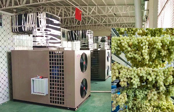 The photo shows the application of PHNIX heat pump dryer for grape drying in China.