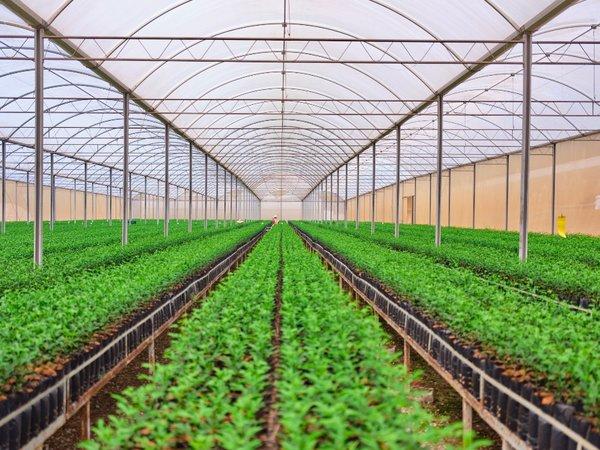 Citrosuco自有苗圃基地培育的树苗