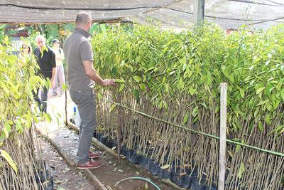 Sebastien Gouspillou, Development Manager Europe - getting close with Aquilaria tree saplings
