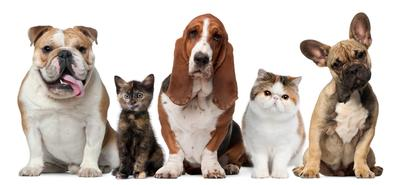 The global pet food ingredients market is gaining momentum with the number of pet-owners having significantly increased in recent years.