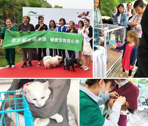 瑞鹏医院医生正在为待领养狗狗体检和驱虫