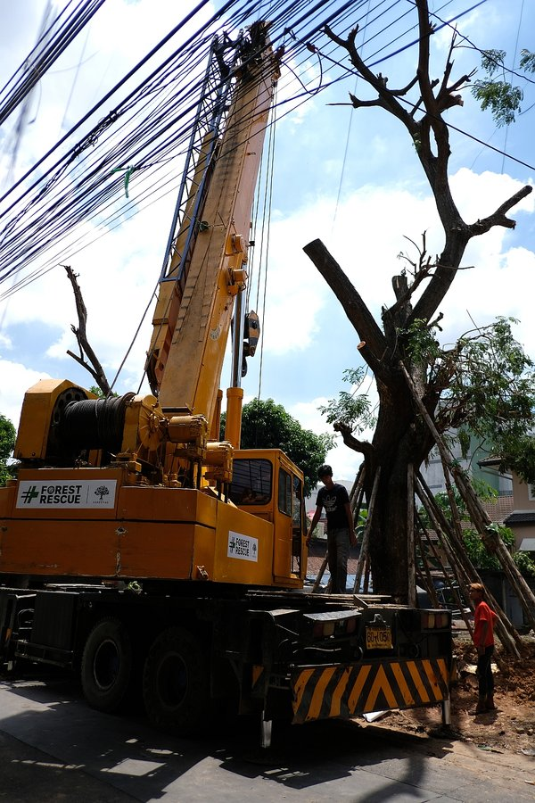 THE FORESTIAS by MQDC's Forest Rescue Team Saves Bangkok's Threatened Trees
