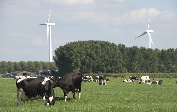 菲仕兰助力荷兰乳业提前实现2020户外放牧目标
