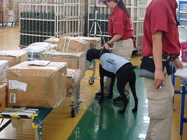 Dog trained to detect international postal deliveries