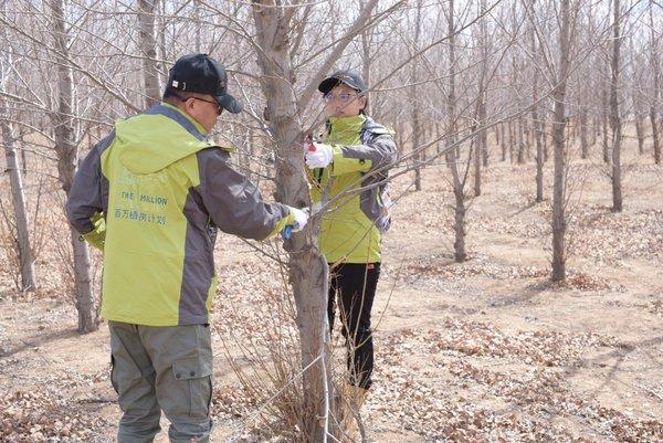 养乐多志愿者正在修剪树枝