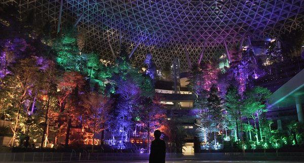 Discover Meaningful Beauty in the SHISEIDO FOREST VALLEY at Jewel Changi Airport