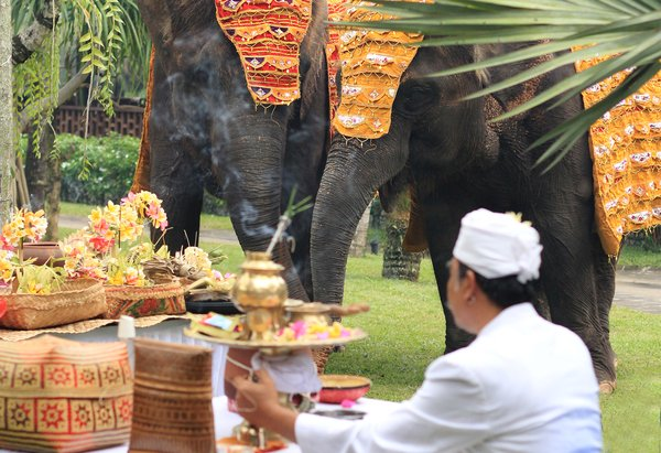 Bali Zoo Celebrated Tumpek Kandang Ritual for all its Resident Faunas