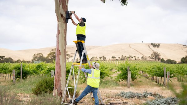 Installation of a Bat Box at Pernod Ricard Winemakers, Barossa Valley