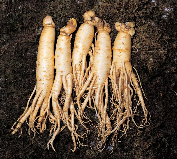 The Korea Ginseng Association