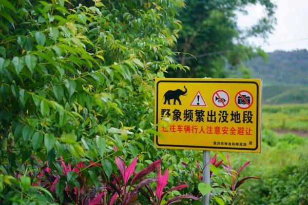 野象出没地区的预警提示